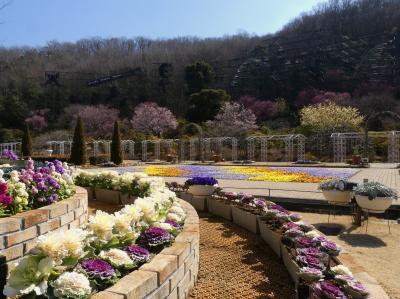 「あしかがフラワーパーク」の早春の花_2021_蝋梅・紅梅・白梅は見頃後半、冬ボタンで賑わう(栃木県・足利市)