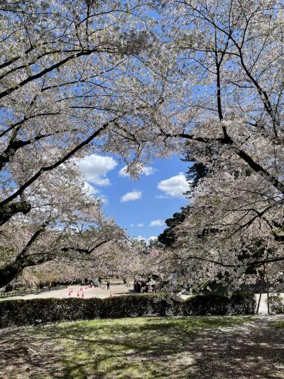 *子連れ【秋田・青森】旅行記②~弘前の桜とねぷたとアップルパイ~