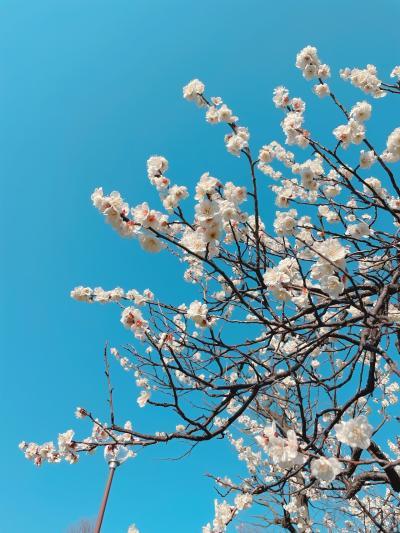 春の陽気に誘われて 世田谷線&花鳥風月活動