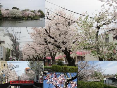 東京・大田区・水の通り跡と桜のプロムナード 散策