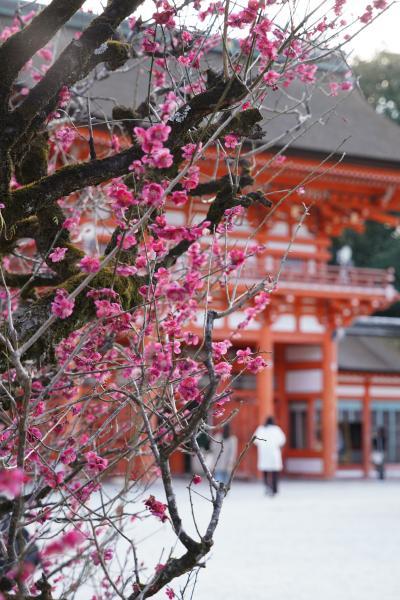 20210222-4 京都 下鴨神社、光琳の梅がえぇ感じかも