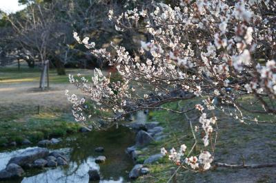 20210222-5 京都 京都御苑の梅林も寄って帰るかなぁ