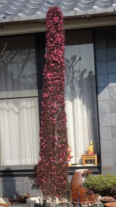 久しぶりに、宝塚市中筋の街歩きに出かけました その1。