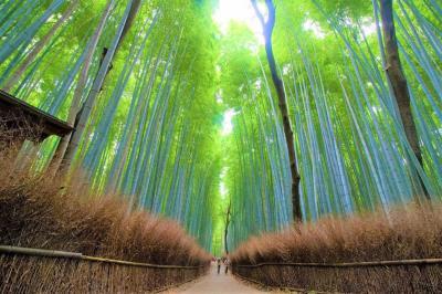 2020初夏の京都嵐山竹林の旅