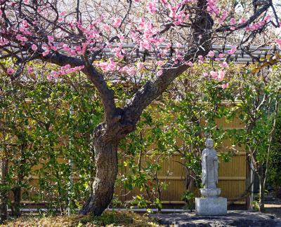 春よ来い(早春の世田谷砧を散歩)