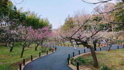 横浜市児童遊園地の梅や河津桜