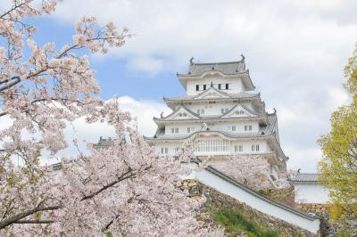 2020姫路城 桜満開の姫路城