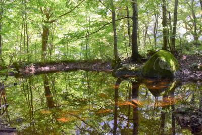 飯豊連峰の麓を散策する温身平森林セラピーツアー2020~ブナの天然林と神秘的な池~(山形)