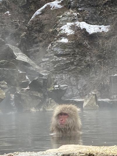 冬の地獄谷野猿公苑