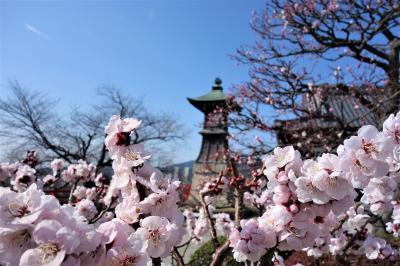 「春が来た~♪」 2021中山寺梅林