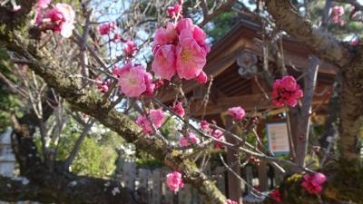 緑ヶ丘公園から臂岡天満宮の梅花のリベンジと、大野地区の園芸店へ その2。