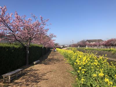 2021年02月 渥美半島花巡り 風力発電と免々田川菜の花桜祭り