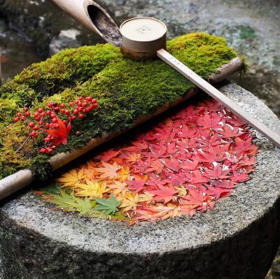 秋の京都で紅葉三昧 今度は女子旅 (2) 毘沙門堂と柳谷観音、ちょっとだけ大阪