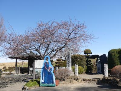 「荻野吟子 生誕の地」の吟子桜(河津桜)_2021_まだ咲き始め、開花はほんの少しです(熊谷市俵瀬)