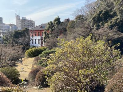 早春の小石川植物園
