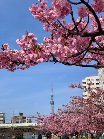 家の近所で春うらら♪