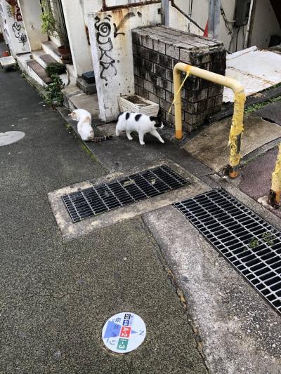 初めて冬の沖縄へ★番外編:2020~2021年末年始の旅
