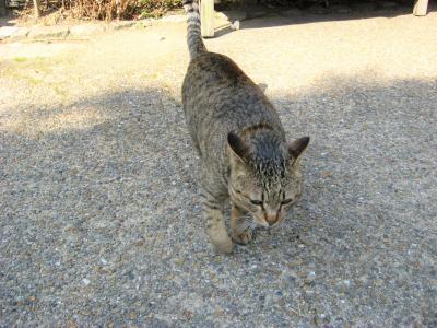 京都☆哲学の道は猫の道かもね~(=^・^=)