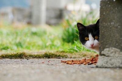 福岡県新宮から渡る猫の島、相島へ&博多街歩きと中洲オキニ大衆酒場編