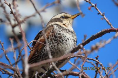 亀久保西公園で見られた小鳥たち