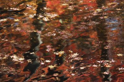真紅 時々黄金色☆錦繍の軽井沢☆彡〈1〉写友たちとのフォトさんぽ編