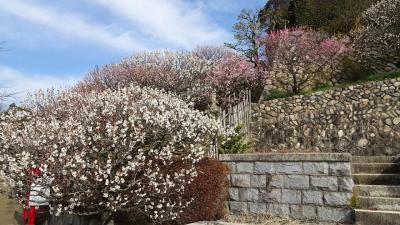 ゴンママが旅行中で、中山寺に参拝しました その3。