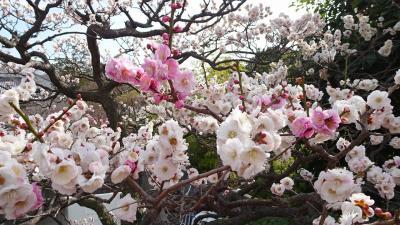 ゴンママが旅行中で、中山寺に参拝しました その4。