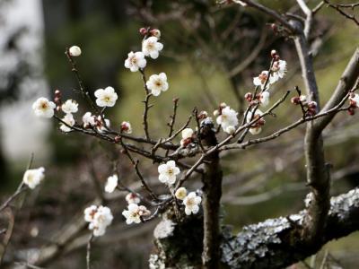 初春の嵯峨野散策