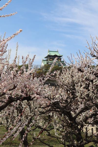 大阪の早春を彩る梅林鑑賞