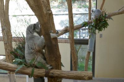 神戸王子動物園②