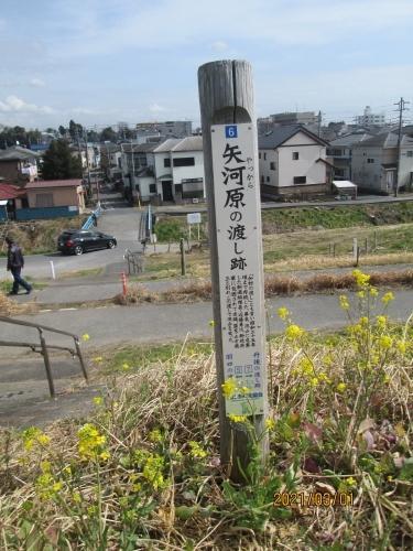 流山市の加・千歳堂・江戸川88ヶ所めぐり(67)矢向原の渡し