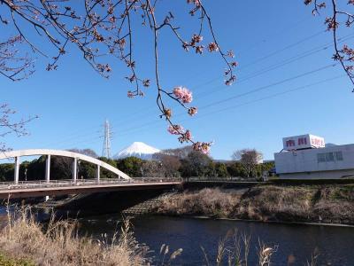 散歩 =潤井川沿いに= 2021.02.19