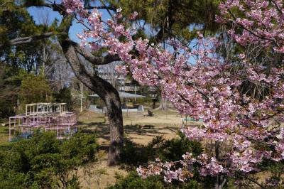 20210303-2 京都 淀城跡公園にも河津桜ですねぇ