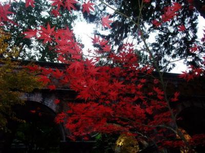 2011年11月 京都紅葉&食べまくりウォーキング 第1弾♪