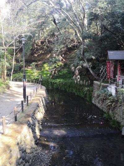 春のお散歩 等々力渓谷