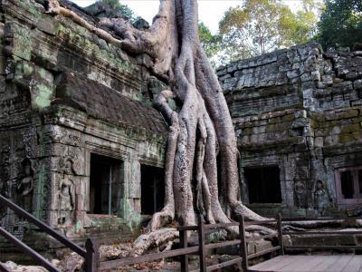 2019年12月 カンボジア2日目 午後その2 タ・プローム遺跡には巨木が巻き付いていました。