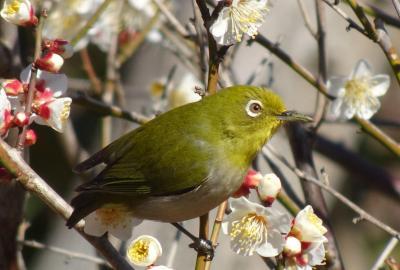 馬場花木園散歩 2月の花(18種)と野鳥たち 2021年