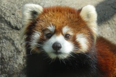 天王寺動物園&ひらかたパーク 近畿3県の緊急事態宣言解除、最初の越境レサ紀行は肩慣らしがてら隣県の2園に訪問です