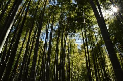 アジフライ定食の旅⑭ 単発  鎌倉市 叶夢かむ
