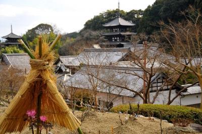 冬牡丹に誘われ、なぞ多き 二上山の麓当麻寺(たいまでら)へ
