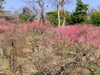 お得な「歩くまち・京都 レールきっぷ」を利用して、京都の梅園巡りとグルメを楽しんだ2021年3月