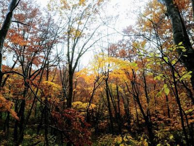 Go to 青森で山と温泉(3) -白神山地トレッキングから深浦へ