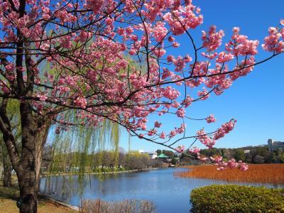 2021年3月 上野公園・寛永寺周辺