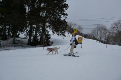 CRESSONで行く~2020年~21年シーズン・野沢温泉スキー9泊10日 スキー&犬もスキー?①