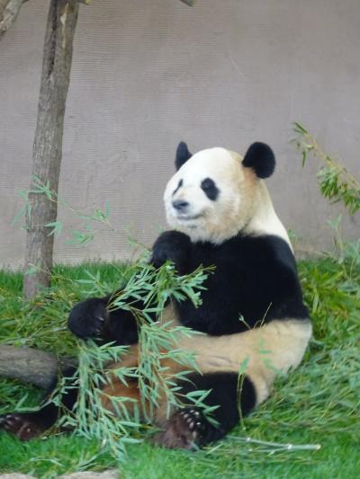 そうだ、パンダに癒されよう♪ マリンライブに感動☆@南紀白浜 アドベンチャーワールド