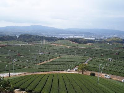 紆余曲折あったけど、2021年の初飛行も九州から!福岡3泊&佐賀1泊 ② 一面の茶畑に感動!九州オルレ八女コースを歩く