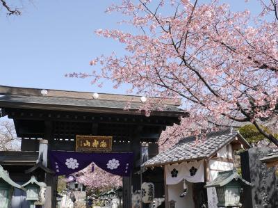 密蔵院の安行桜☆2021/03/16