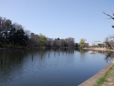 M MAR 2021  石神井公園・・・・・③石神井池
