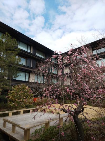 朝ごはんとホテル内散策【HOTEL THE MITSUI KYOTO に初宿泊 vol.4】
