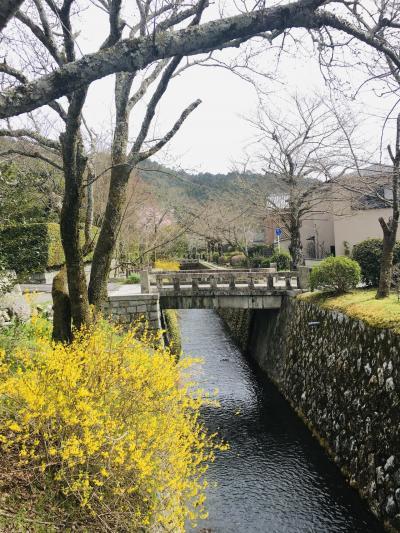 開花宣言翌日のぶらり京都さんぽ からの 京都と滋賀の関係性についての考察